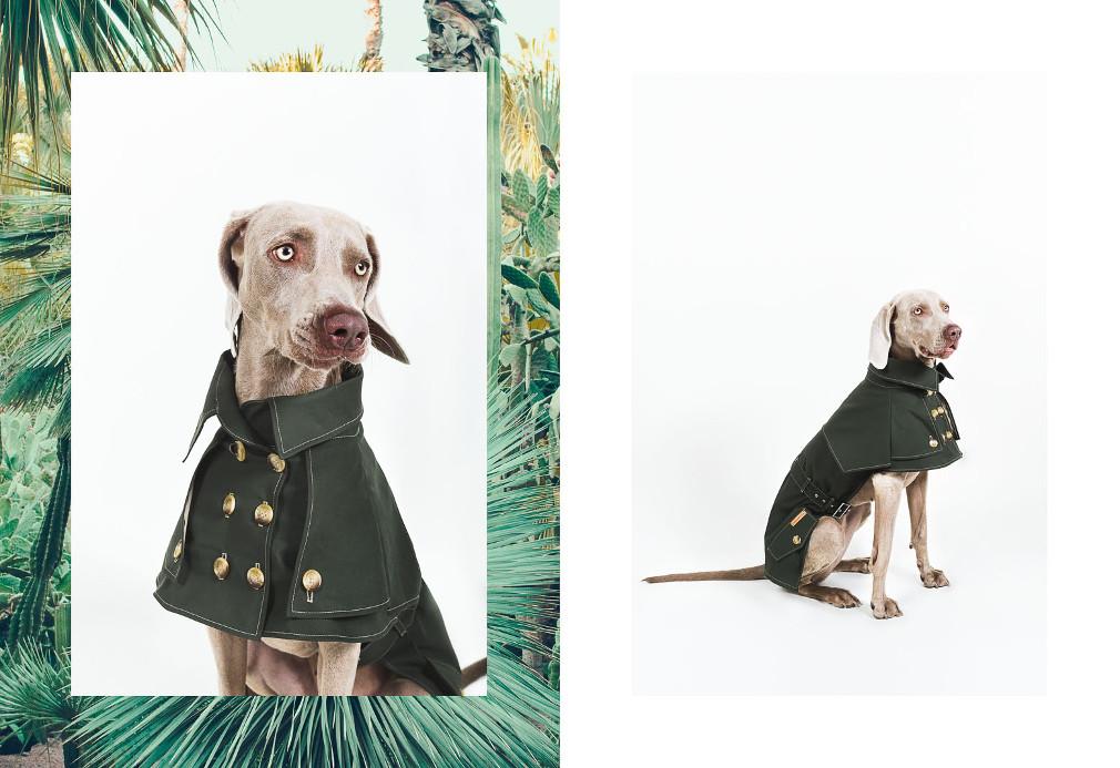 happystaffy_dog_apparel-Paul-Aidan-Perry-6