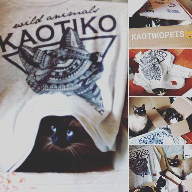 kaotiko_instagram_concurso_fanday4