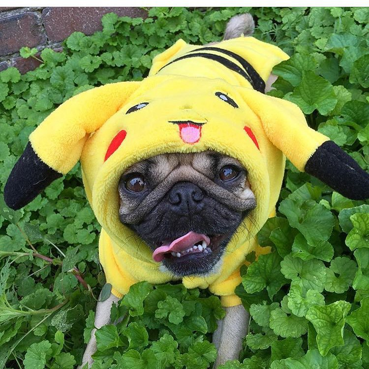 pokemon-halloween-costumes-dogs